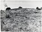 Chucalissa Native American Mound Site (40SY1, Unit 4) - Shelby County, TN 40SY1-4/R7-F7