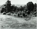 Chucalissa Native American Mound Site (40SY1, Unit 6) - Shelby County, TN 40SY1-6/R7-F11