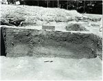 Chucalissa Native American Mound Site (40SY1, Unit 6) - Shelby County, TN 40SY1-6/R-14-F3