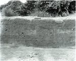 Chucalissa Native American Mound Site (40SY1, Unit 6) - Shelby County, TN 40SY1-6/R9-F29