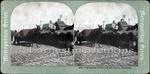 Memphis 20th Century: Cobblestones