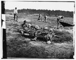 African Americans collecting bones of soldiers killed in battle, Cold Harbor, Va
