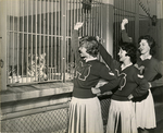 Tom the Tiger and Memphis State University cheerleaders, 1963
