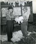 Cotton harvesting, 1958