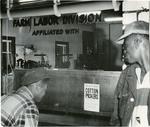 Cotton pickers, 1950