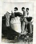 Cotton harvesting, Memphis, TN, 1937