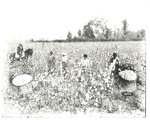 Cotton pickers, early 20th century