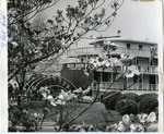 Delta Queen, Memphis, TN, 1962