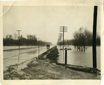 Summer Avenue near the Wolf River, Memphis, Tennessee, 1937