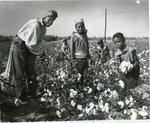 Cotton pickers, 1964