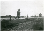 Harness racing, Memphis, circa 1900