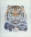 """""""Tiger Country Tom II"""" by Betty Malone, 1994 by Betty Malone"""